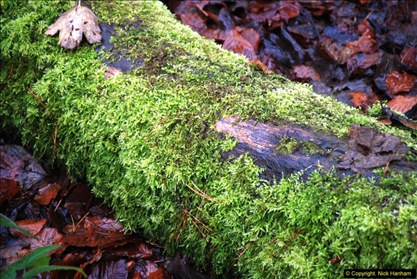 2014-11-21 The Woodland in Winter. Wendover Woods, Buckinhhamshire.  (12)012