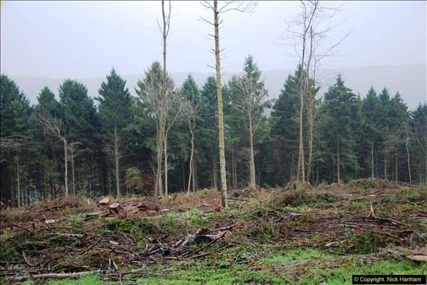 2014-11-21 The Woodland in Winter. Wendover Woods, Buckinhhamshire.  (120)120