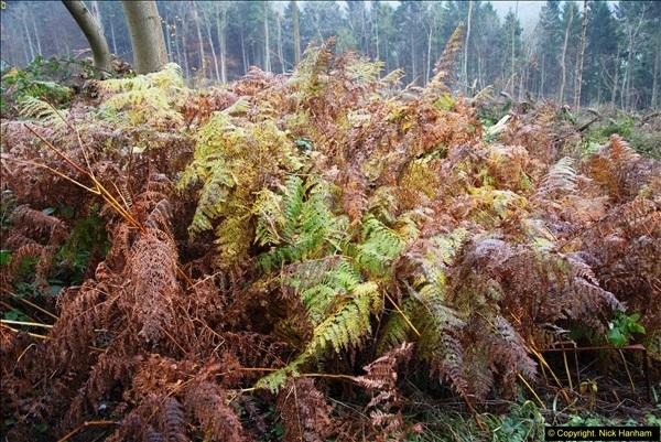 2014-11-21 The Woodland in Winter. Wendover Woods, Buckinhhamshire.  (121)121