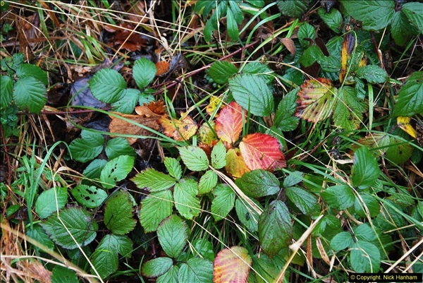 2014-11-21 The Woodland in Winter. Wendover Woods, Buckinhhamshire.  (122)122