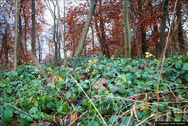 2014-11-21 The Woodland in Winter. Wendover Woods, Buckinhhamshire.  (123)123