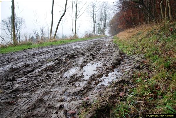 2014-11-21 The Woodland in Winter. Wendover Woods, Buckinhhamshire.  (127)127