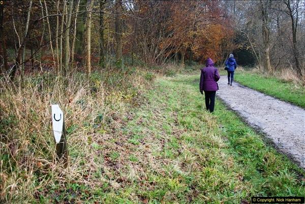2014-11-21 The Woodland in Winter. Wendover Woods, Buckinhhamshire.  (129)129