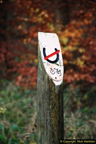2014-11-21 The Woodland in Winter. Wendover Woods, Buckinhhamshire.  (131)131