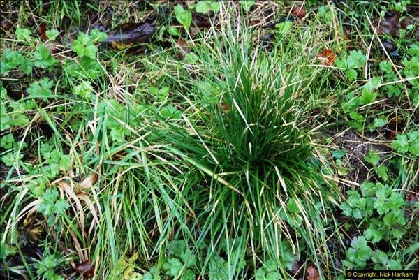 2014-11-21 The Woodland in Winter. Wendover Woods, Buckinhhamshire.  (132)132