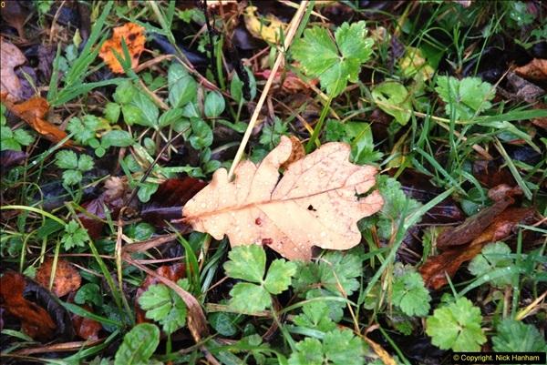 2014-11-21 The Woodland in Winter. Wendover Woods, Buckinhhamshire.  (133)133