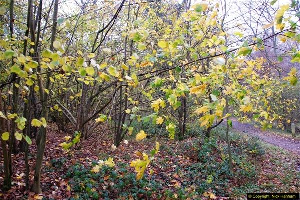 2014-11-21 The Woodland in Winter. Wendover Woods, Buckinhhamshire.  (134)134