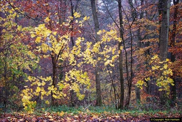 2014-11-21 The Woodland in Winter. Wendover Woods, Buckinhhamshire.  (135)135