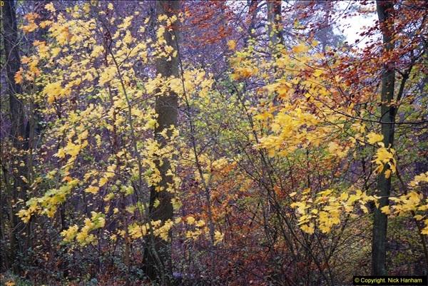 2014-11-21 The Woodland in Winter. Wendover Woods, Buckinhhamshire.  (136)136