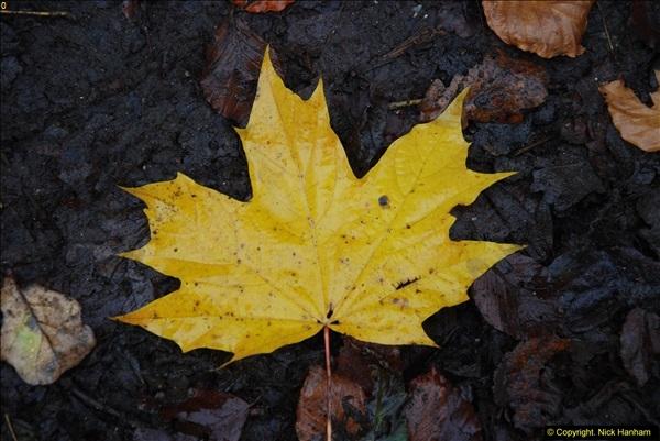 2014-11-21 The Woodland in Winter. Wendover Woods, Buckinhhamshire.  (137)137