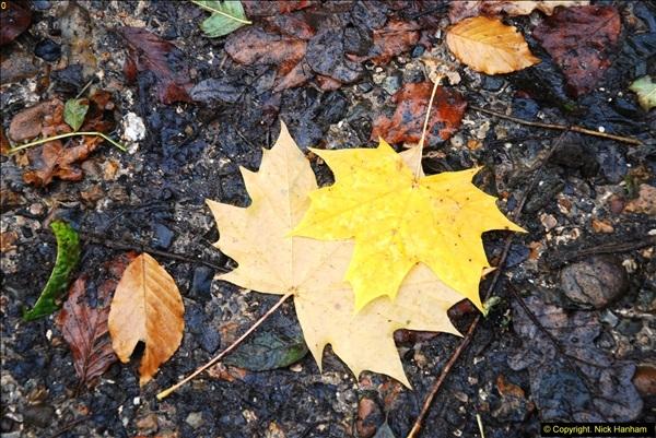 2014-11-21 The Woodland in Winter. Wendover Woods, Buckinhhamshire.  (138)138