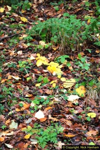 2014-11-21 The Woodland in Winter. Wendover Woods, Buckinhhamshire.  (139)139