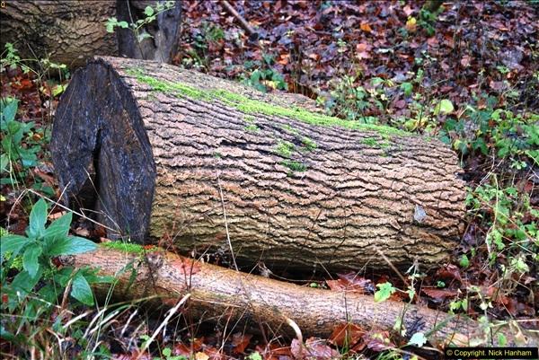 2014-11-21 The Woodland in Winter. Wendover Woods, Buckinhhamshire.  (140)140