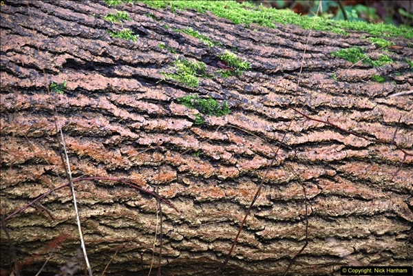 2014-11-21 The Woodland in Winter. Wendover Woods, Buckinhhamshire.  (141)141
