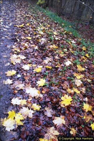 2014-11-21 The Woodland in Winter. Wendover Woods, Buckinhhamshire.  (142)142