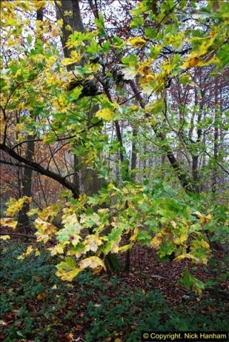 2014-11-21 The Woodland in Winter. Wendover Woods, Buckinhhamshire.  (143)143