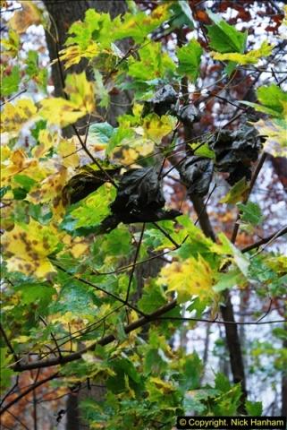 2014-11-21 The Woodland in Winter. Wendover Woods, Buckinhhamshire.  (144)144