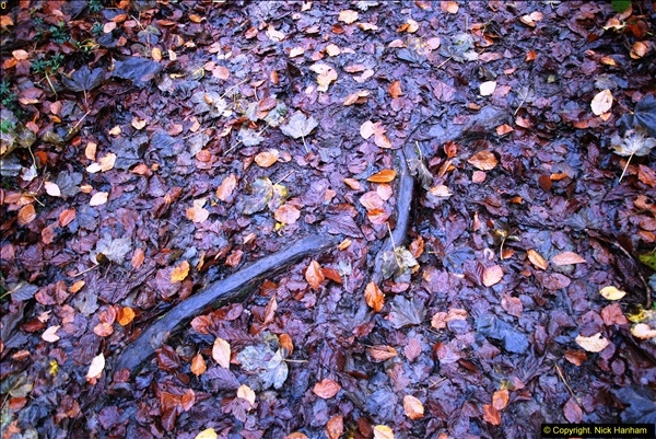 2014-11-21 The Woodland in Winter. Wendover Woods, Buckinhhamshire.  (145)145