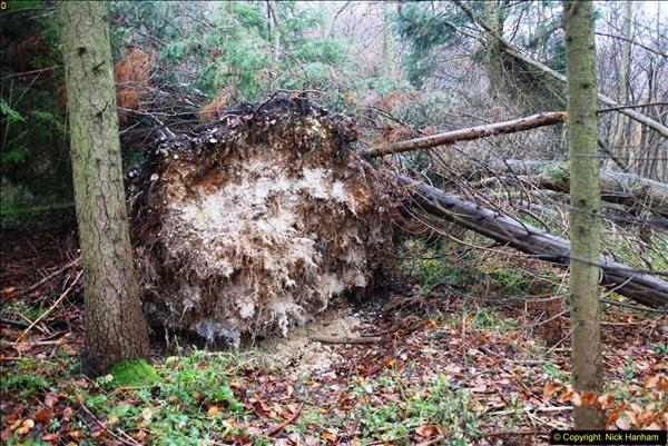 2014-11-21 The Woodland in Winter. Wendover Woods, Buckinhhamshire.  (146)146