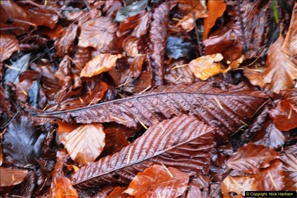 2014-11-21 The Woodland in Winter. Wendover Woods, Buckinhhamshire.  (149)149