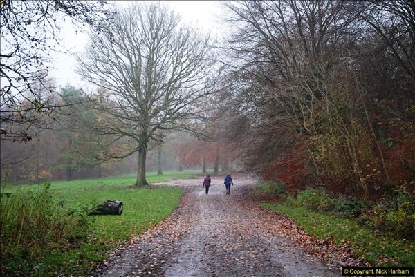 2014-11-21 The Woodland in Winter. Wendover Woods, Buckinhhamshire.  (150)150