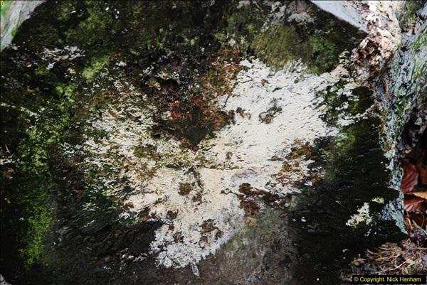 2014-11-21 The Woodland in Winter. Wendover Woods, Buckinhhamshire.  (152)152