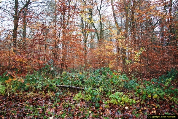 2014-11-21 The Woodland in Winter. Wendover Woods, Buckinhhamshire.  (153)153