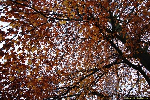 2014-11-21 The Woodland in Winter. Wendover Woods, Buckinhhamshire.  (154)154