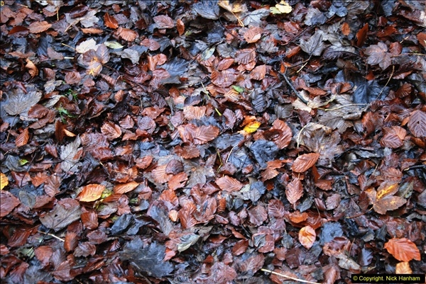 2014-11-21 The Woodland in Winter. Wendover Woods, Buckinhhamshire.  (155)155