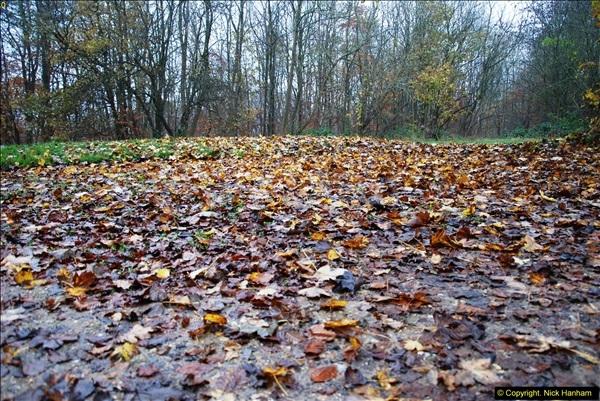 2014-11-21 The Woodland in Winter. Wendover Woods, Buckinhhamshire.  (156)156