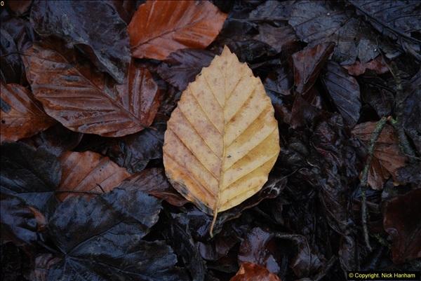 2014-11-21 The Woodland in Winter. Wendover Woods, Buckinhhamshire.  (157)157