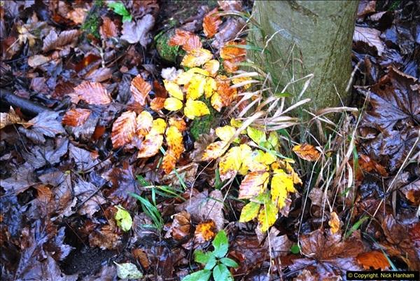 2014-11-21 The Woodland in Winter. Wendover Woods, Buckinhhamshire.  (159)159