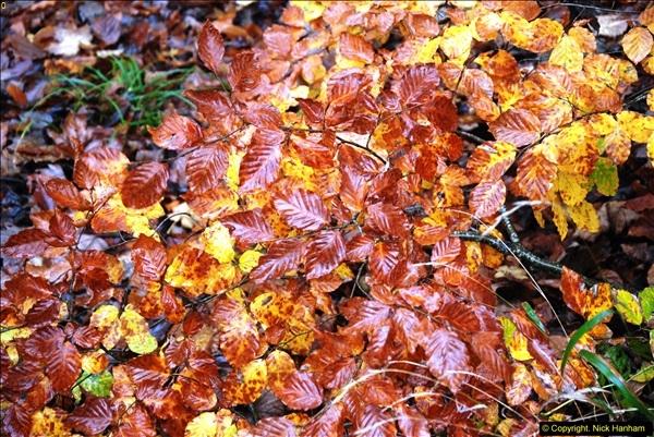 2014-11-21 The Woodland in Winter. Wendover Woods, Buckinhhamshire.  (160)160