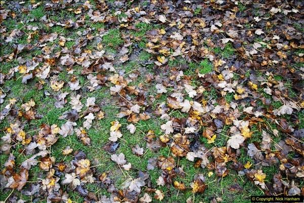 2014-11-21 The Woodland in Winter. Wendover Woods, Buckinhhamshire.  (163)163