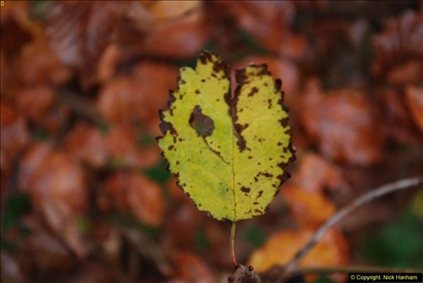 2014-11-21 The Woodland in Winter. Wendover Woods, Buckinhhamshire.  (164)164