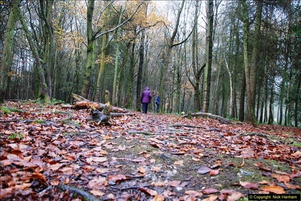 2014-11-21 The Woodland in Winter. Wendover Woods, Buckinhhamshire.  (165)165
