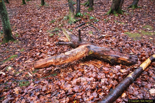 2014-11-21 The Woodland in Winter. Wendover Woods, Buckinhhamshire.  (166)166