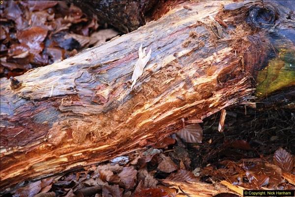 2014-11-21 The Woodland in Winter. Wendover Woods, Buckinhhamshire.  (167)167