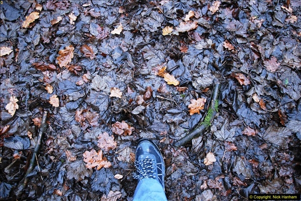 2014-11-21 The Woodland in Winter. Wendover Woods, Buckinhhamshire.  (168)168
