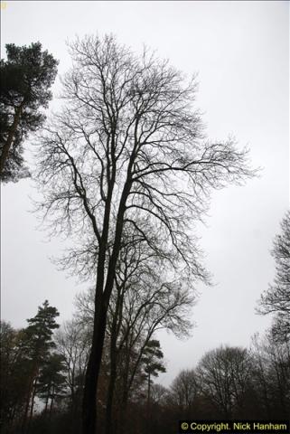 2014-11-21 The Woodland in Winter. Wendover Woods, Buckinhhamshire.  (171)171