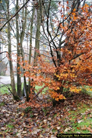 2014-11-21 The Woodland in Winter. Wendover Woods, Buckinhhamshire.  (172)172