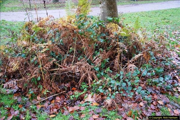 2014-11-21 The Woodland in Winter. Wendover Woods, Buckinhhamshire.  (174)174