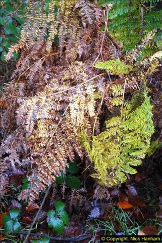 2014-11-21 The Woodland in Winter. Wendover Woods, Buckinhhamshire.  (177)177