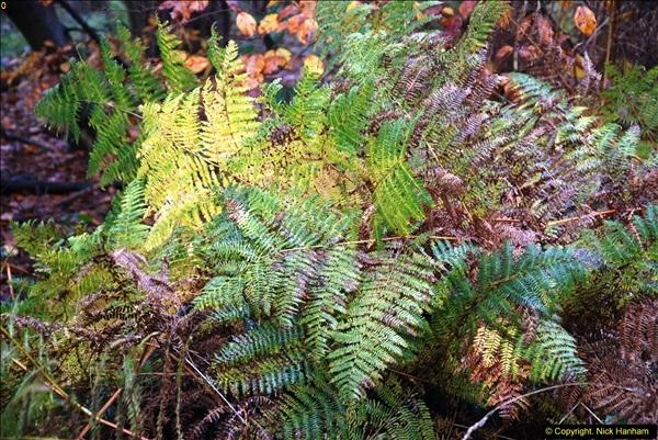 2014-11-21 The Woodland in Winter. Wendover Woods, Buckinhhamshire.  (27)027