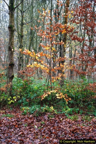 2014-11-21 The Woodland in Winter. Wendover Woods, Buckinhhamshire.  (32)032