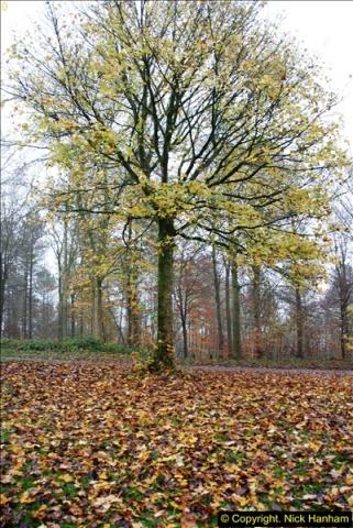 2014-11-21 The Woodland in Winter. Wendover Woods, Buckinhhamshire.  (33)033