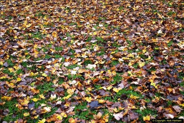 2014-11-21 The Woodland in Winter. Wendover Woods, Buckinhhamshire.  (34)034