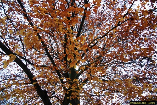 2014-11-21 The Woodland in Winter. Wendover Woods, Buckinhhamshire.  (35)035