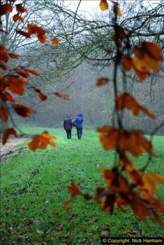 2014-11-21 The Woodland in Winter. Wendover Woods, Buckinhhamshire.  (37)037