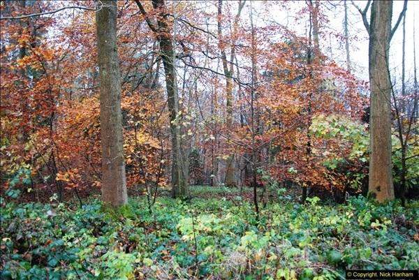2014-11-21 The Woodland in Winter. Wendover Woods, Buckinhhamshire.  (41)041